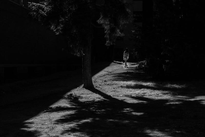 Into the dark di zucco