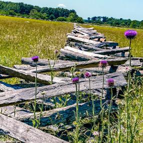 by Jim Harris - Landscapes Prairies, Meadows & Fields ( field, fence, purple, meadow, praire )