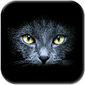 Black Cats Live Wallpaper icon