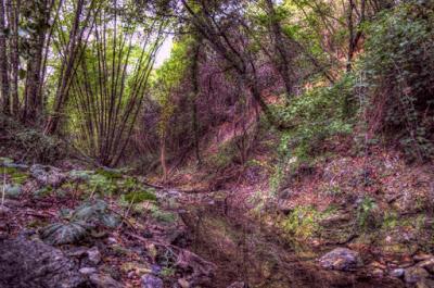 Nella foresta.... di nicola012
