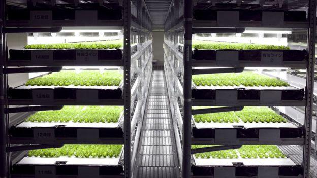 Автоматическая ферма