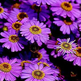 by Kuntal D - Flowers Flowers in the Wild