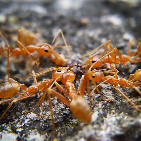 Perkumpul-ANT by Sengkiu Pasaribu - Instagram & Mobile Other