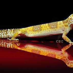 REFLECTION by Vandie Ndie - Animals Reptiles