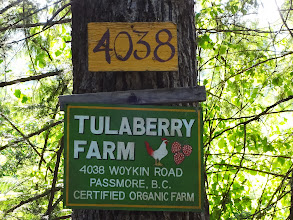 Photo: A series of 4-wetlands were restored on the Tulaberry Farm near Castlegar, British Columbia.