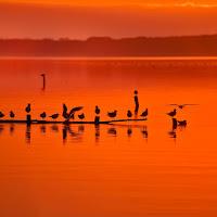 Lago di Massaciuccoli di