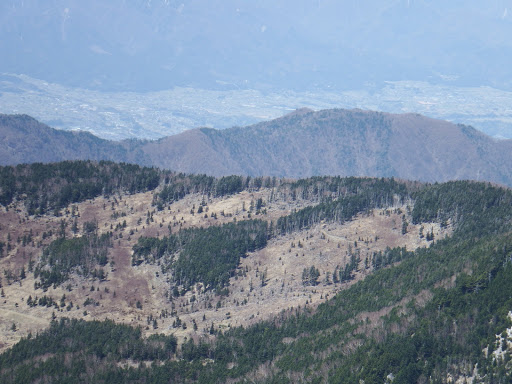 栂村山・前茶臼山間の伐採地