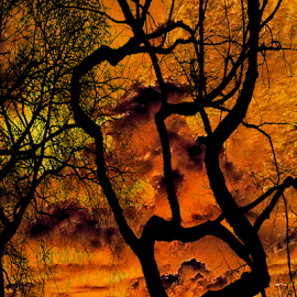 inferno by Edward Gold - Digital Art Things ( orange, red, silhouette, artistic, trees, inferno,  )