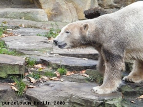 Photo: Knut ist heute in Graufaerbung unterwegs ;-)