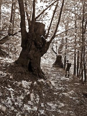 Il grande vecchio di Xperia Tuscany