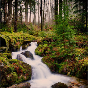 Nant y Blymbren by David Bevan - Landscapes Waterscapes