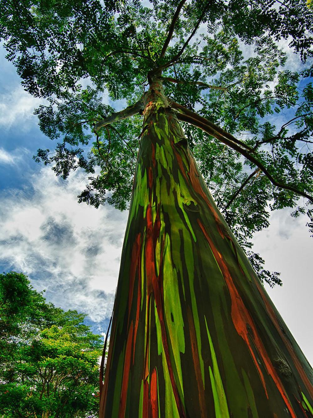 16 gốc cây cổ thụ tuyệt đẹp của thế giới: Số 15 cứ ngỡ chỉ có trong hoạt hình