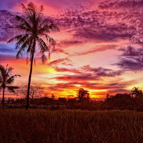 Batang kelapa by ANdi Khoebill - Landscapes Prairies, Meadows & Fields