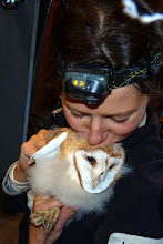 Photo: Sofi Hindmarch giving Barn Owlet some love. Sofi has been studying Barn Owls in Delta & Surrey for many years. Check out her web site: