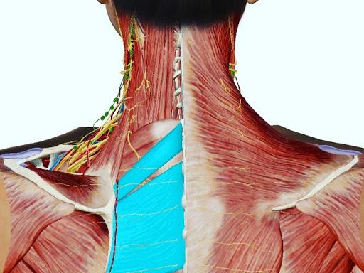 肩こり(小菱形筋、大菱形筋)