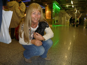 Photo: Momo: Momo fand Susanne morgens im Zwinger von einem 60kg Mastiff. Jemand hatte sie wohl Nachts entsorgen wollen und dachte wohl, dass der Mastiff kurzen Prozess mit ihr macht. Später fand sie dann noch 2 Welpen im gleichen Alter in der Nähe, sodass sie vermutet, dass dies Geschwister sind. Ein Geschwisterchen hab ich dann auch genommen, nämlich Milli.