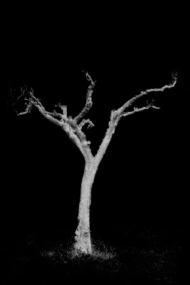 Gli alberi muoiono in piedi. di NadiaT