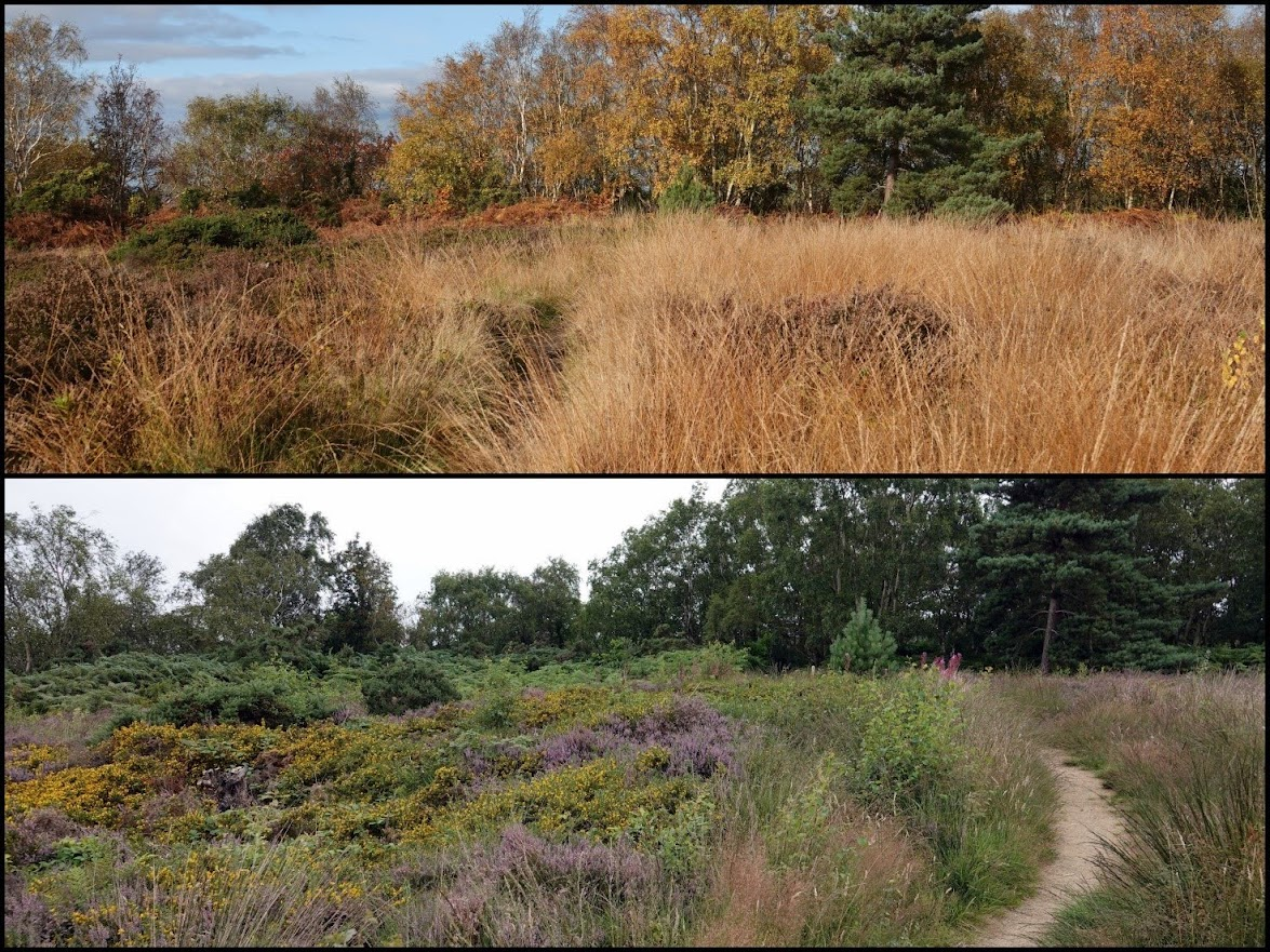 Cleaver Heath in November (above) and August (below)
