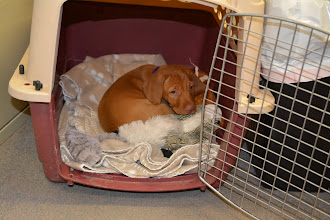 Photo: After her play, she would get into her kennel all by herself for a nap