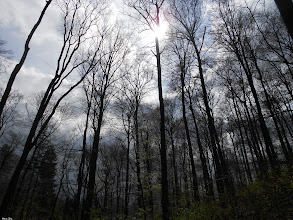 Photo: up into the sky For #TreeTuesday curated by +Christina Lawrie& +Shannon S. Myers also for #HQSPPromotion curated by +Rinus Bakker