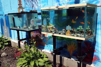 Photo: Aquariums they found on a bike tour around Montreal