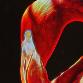 Abstract Flymingo by Dave Walters - Abstract Patterns ( flymingo, nature, lumix fz200, zoo, birds, colors )