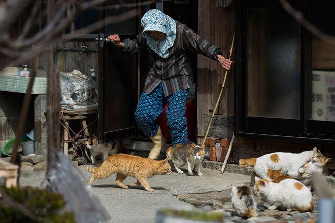 đảo mèo có hơn 120 con mèo