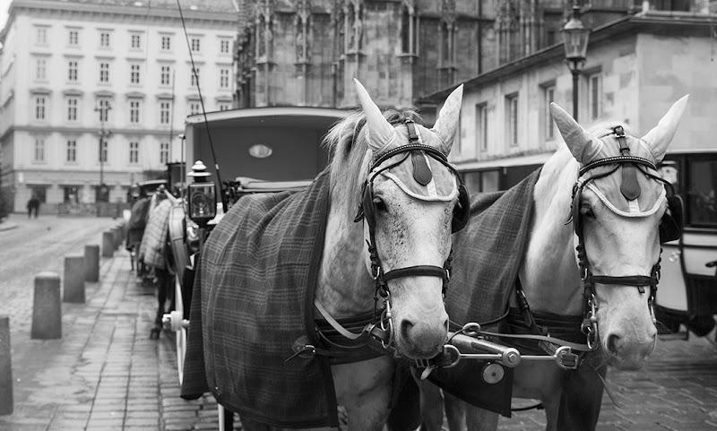 Taxi a Vienna di Alix