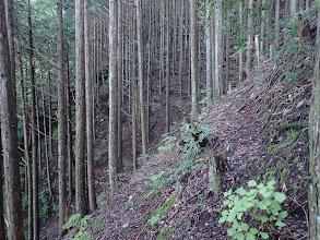 植林帯をトラバース