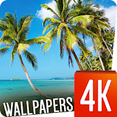 Tropical Wallpapers 4k