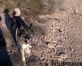 Photo: En lycklig hund