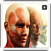Human anatomy and physiology 3D videos