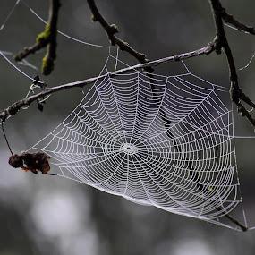 by Valentina Masten - Nature Up Close Webs