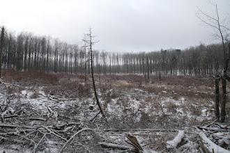 Photo: Malokarpatské bučiny dostávajú zabrať