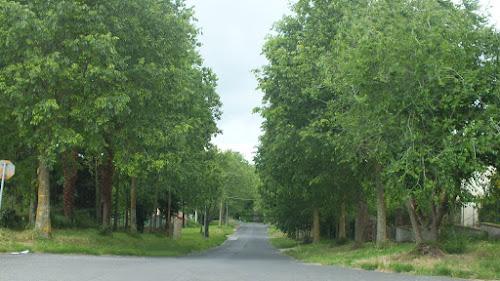 Green road di Barbara Palombi