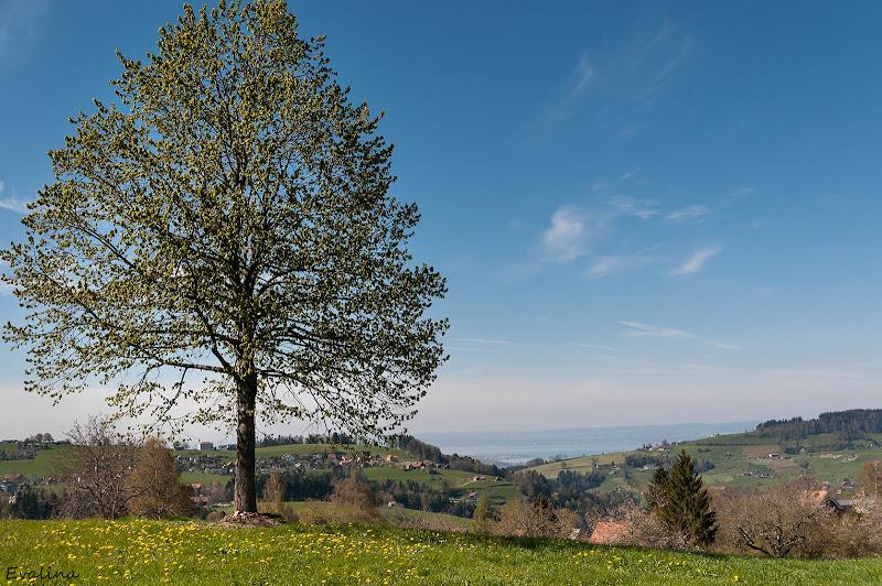 Photo: Frohe Ostern liebe Googler Gemeinde  Aussicht von Trogen zum Bodensee  #landscapephotography +Landscape Photography #nikonshooters  #switzerland  #photomaniaschweiz +Photo Mania Schweiz+Günter Schurr #spring2014  #springtime
