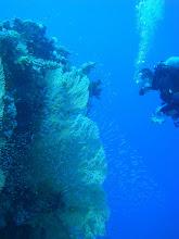 Photo: Glassfish e Gorgonia_Ale