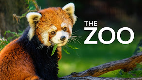 The Zoo thumbnail
