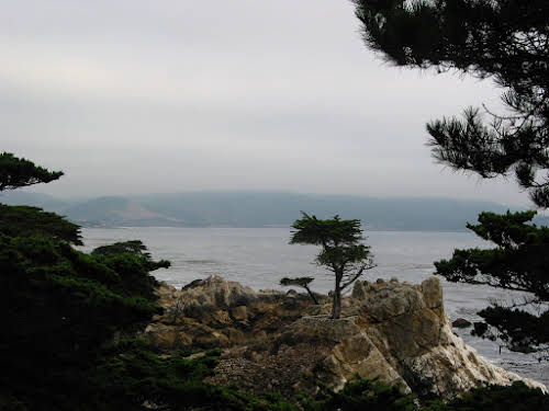 What to Do in Northern California: Attractions & Travel Guide // Lonely Cypress by Monterey