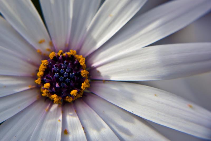 Dettagli microscopici di FotografoPerCaso