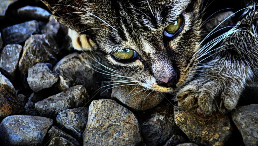 kitty by Kenny Sutan Sati - Animals - Cats Kittens