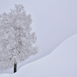Čarobna zima by Bojan Kolman - Nature Up Close Trees & Bushes (  )