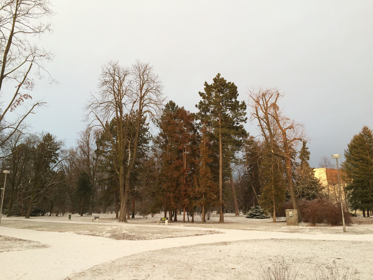 First snow in the park, Piestany, Slovakia