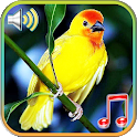 Birds Sounds Ringtones & Wallpapers icon
