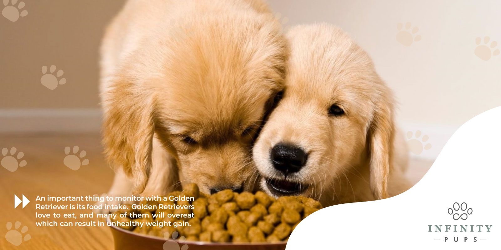 monitor golden retriever's food intake