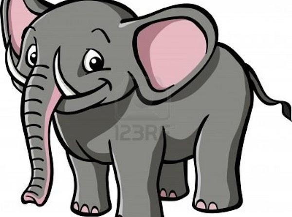 Elephant Stew Recipe