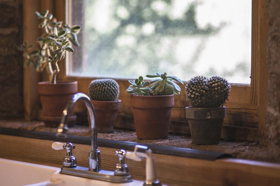 Todo lo que debes saber sobre las plantas de interior