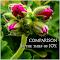 geranium bud pxtyp.jpg