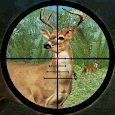Forest Deer Hunting