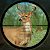 Forest Deer Hunting file APK for Gaming PC/PS3/PS4 Smart TV